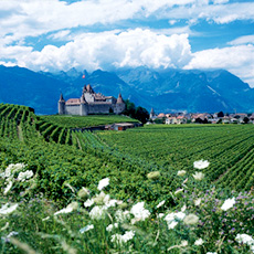 Chablais vineyards.